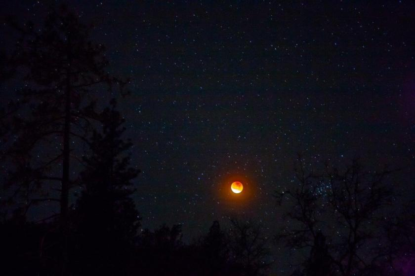 Moon reddened by lunar eclipse hangs over tree-lined, western horizon in a blanket of stars