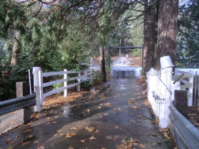 blacktop driveway with white fence on both sides and gate and tall cedar trees