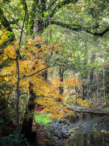 Yellow leaves, green grass and trees next to rock-lined, flowing creek