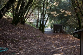 Leaf-covered, creekside trail