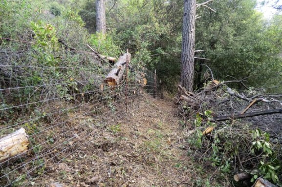 woven wire livestock fence through steep, forested terrain; large, fallen pine trees cut to make path laying by fence