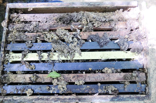 looking at the top of frames in a bee box and the frames are covered in crud, worm pupae and debris