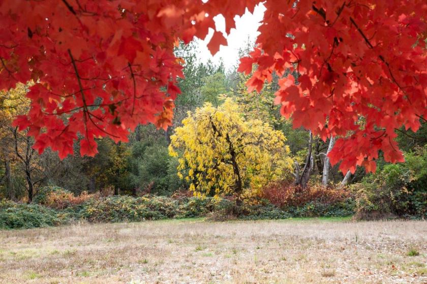 In the background a large, yellow-leafed tree is surrounded by a frame of red leaves in the foreground