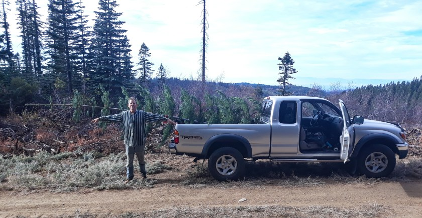 A Toyota pickup with a pine tree in the bed sticking out beyond the tailgate twice the distance of the man with outstretched arms standing there