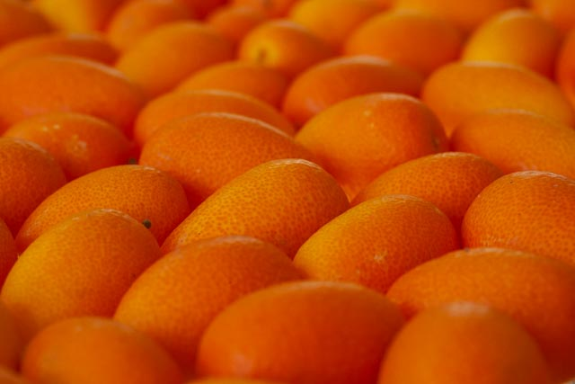 a close up of hundreds of bright orange kumkuats laid closely together on a flat table -- to see the texture on individual skins