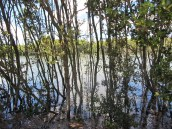 Walking beside the Parramatta River, in north-west Sydney