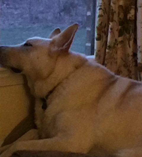 Pecos sleeps on the window ledge after sniffing the evening air.