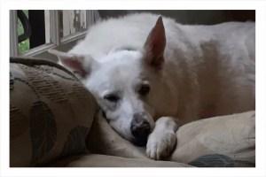 Yuki resting on his favorite bed