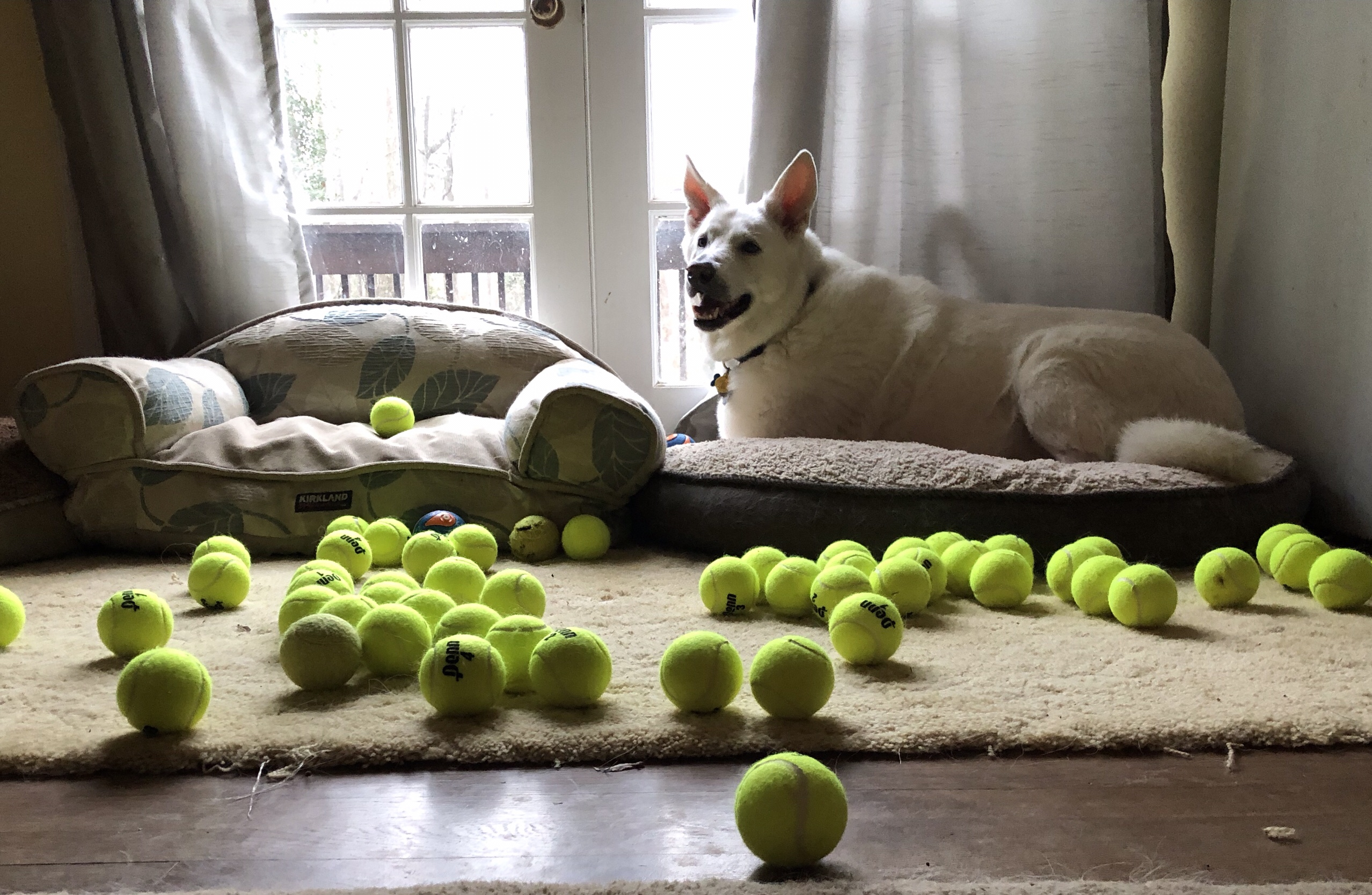 Yuki with his 60 new tennis balls