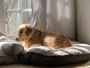 Dandy lying on dog bed in sun