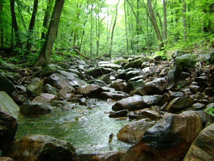 Creek running through Devil's Lake State Park