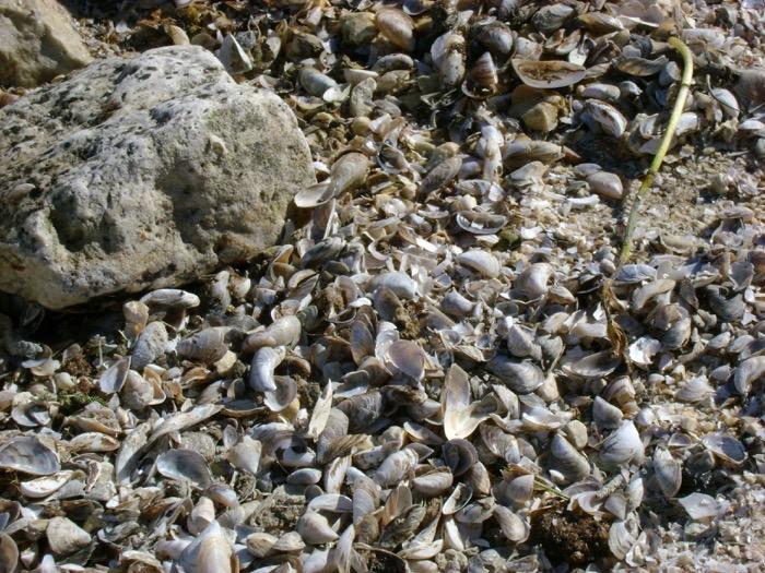 Shell beach on Cana Island in Door County, Wisconsin