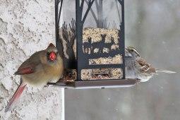 Cardinal-&-Sparrow