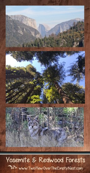 Yosemite-&-Redwoods-PIN