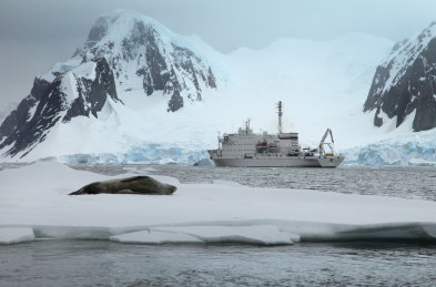 A seal enjoys a nap in the ice as the Ioffe drifts past in the distance.