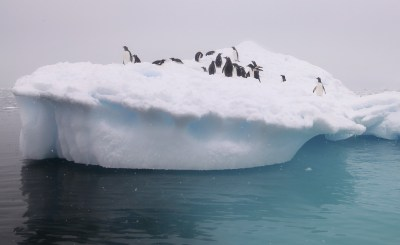 Penguins enjoying a fine day on a groovy-looking iceberg.