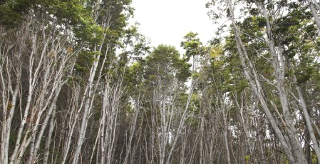 Looking up from the forest hike in Tierra del Fuego National Park.