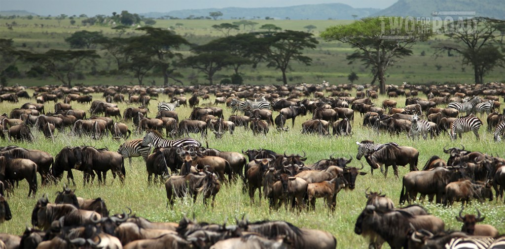 two for the road travel adventure blog tanzania safari serengeti migration