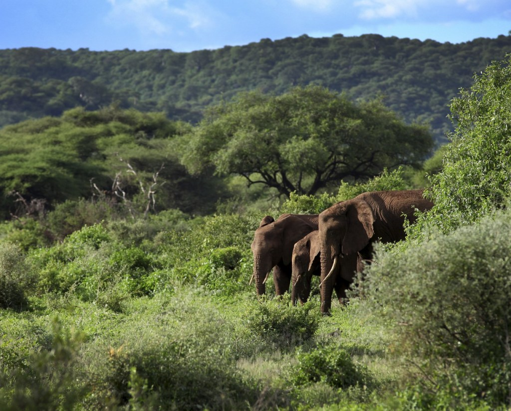 Elephants in Lake Manyara National Park
