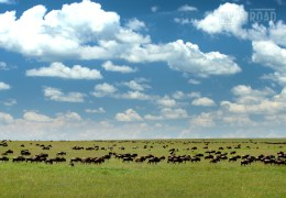 Photo of the Day: The Great Migration in Serengeti National Park