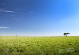 Photo of the Day: The Epic, Empty Beauty of the Serengeti Plain