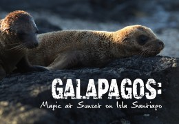 VIDEO: A Thrilling Grand Finale to Our Galapagos Adventure