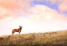 Photo of the Day: Watching Over the Flock in Patagonia