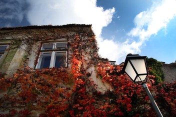 The colors of fall were definitely on display, not only here in Durnstein, but all along the Danube.