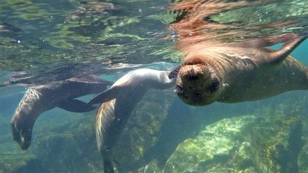 ...where the sea lions are ready to welcome you!
