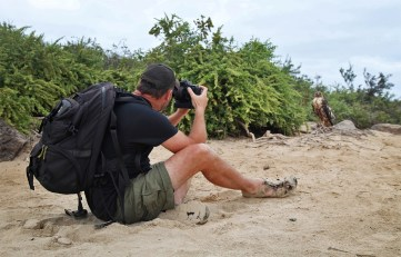 Getting up close (but staying a safe and legal distance) from a majestic Galapagos Hawk.