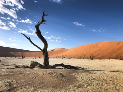 "Deadvlei, which translated to mean ""dead marsh."""