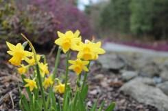 spring close-ups (18)