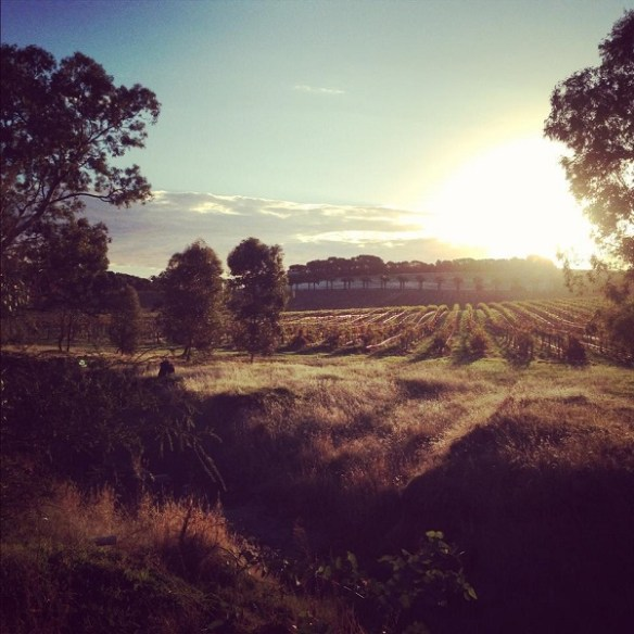 Sunset in the Barossa Valley, May 2013