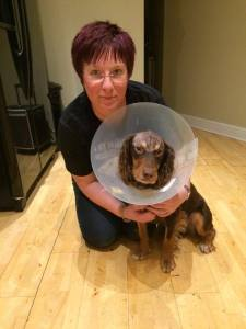 Rolo wearing cone