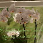 Bringing Nature Indoors – Keeping Orchids Alive!