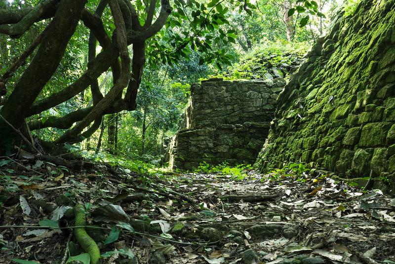 ruiner i jungle
