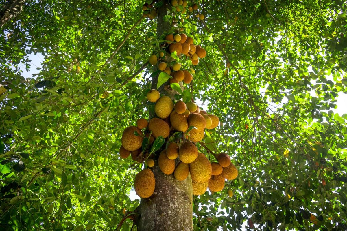parque lage fruits