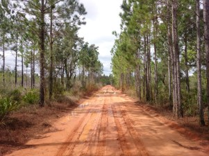 This red clay road was nicer to drive in than most dirt roads. Slippery when wet. Sure made a mess of Smarty.