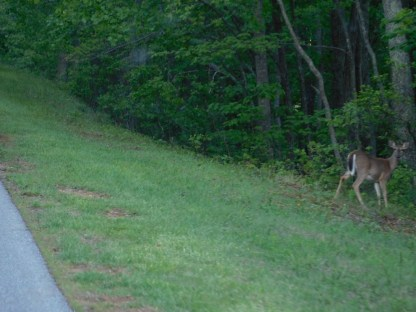I love driving along with deer hanging on the side of the two-lane mountain road!
