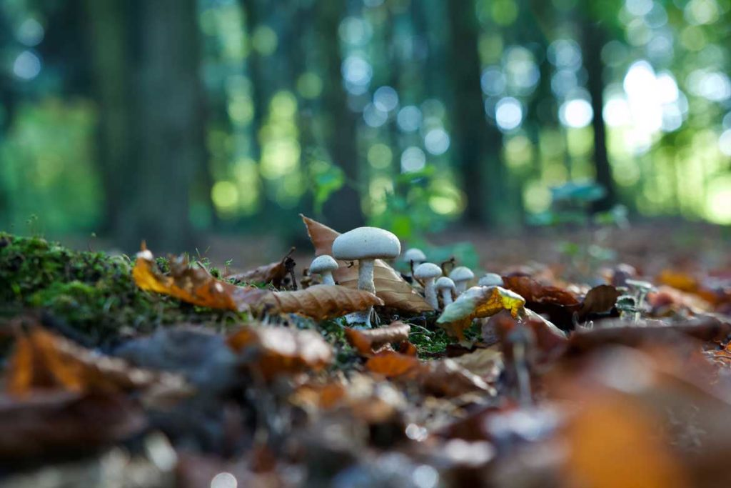 Bornholm słynie z dużej ilości grzybów Dla grzybiarzy to prawdziwy raj.