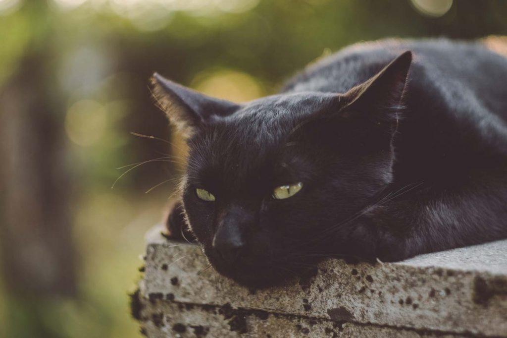 głaskanie zwierząt to sprawdzone sposoby na relaks