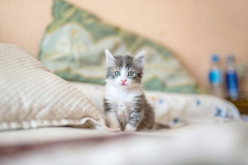 Jakie są plusy posiadania kota? Jest ich sporo.