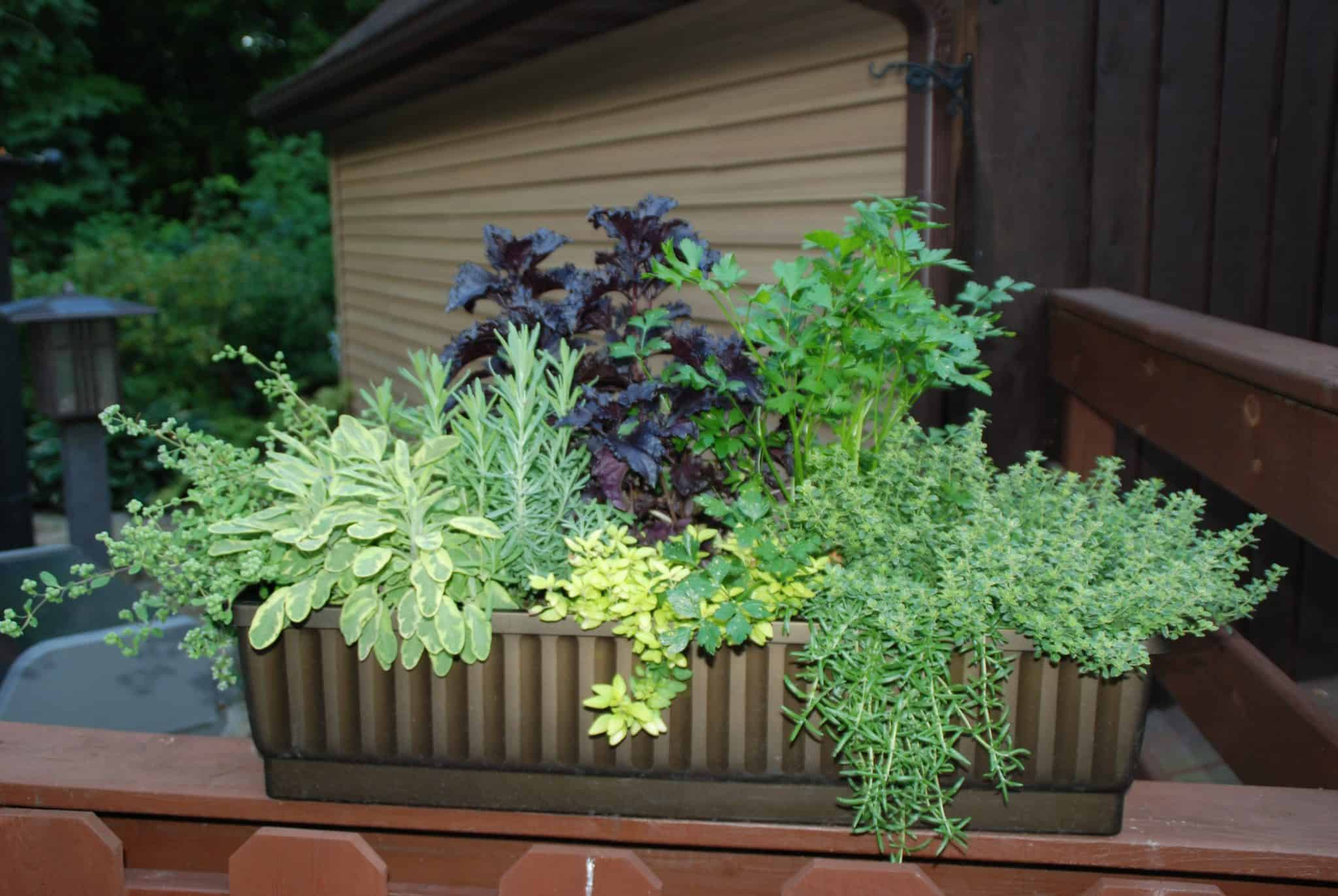 Gardening How To Use Container Gardens When You Have