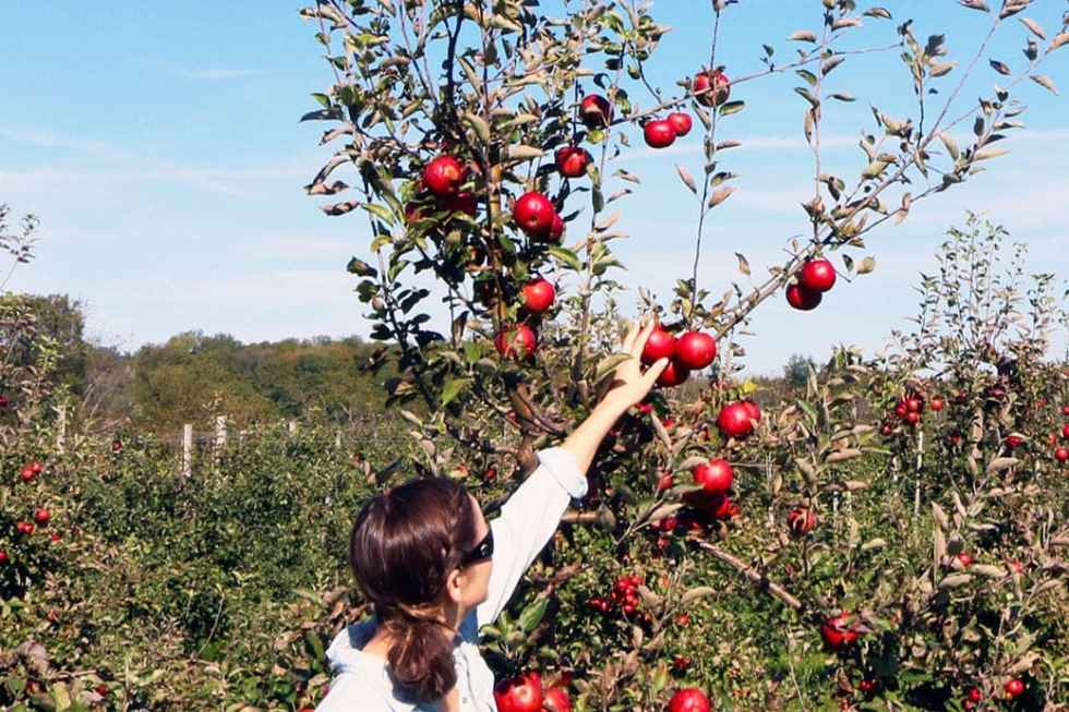 The Perfect Fall Date/Outing (and apple recipes!)