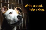 Pedigree to Donate 27,000-lbs of Dog Food to Hurricane Irene Flood Victims