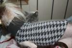 Handmade Dog – Oh Sew Simple Doggy Sweater