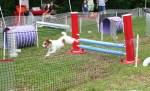 Howl-O-Ween at Pinecrest Gardens Agility Fun Course