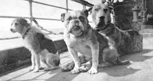 Dogs of the Titanic