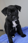 RSPCA Only Takes in Puppy Because It Will Be Media Star