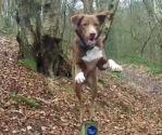 amazing acrobatic dog